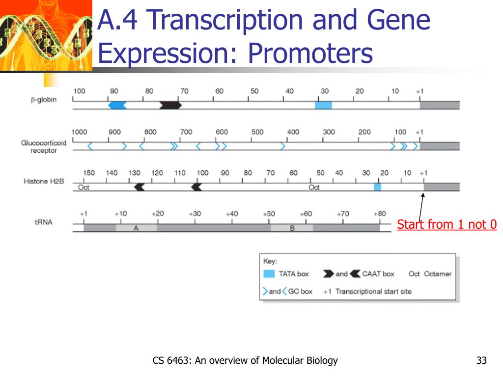 A.4 Transcription and Gene Expression: Promoters