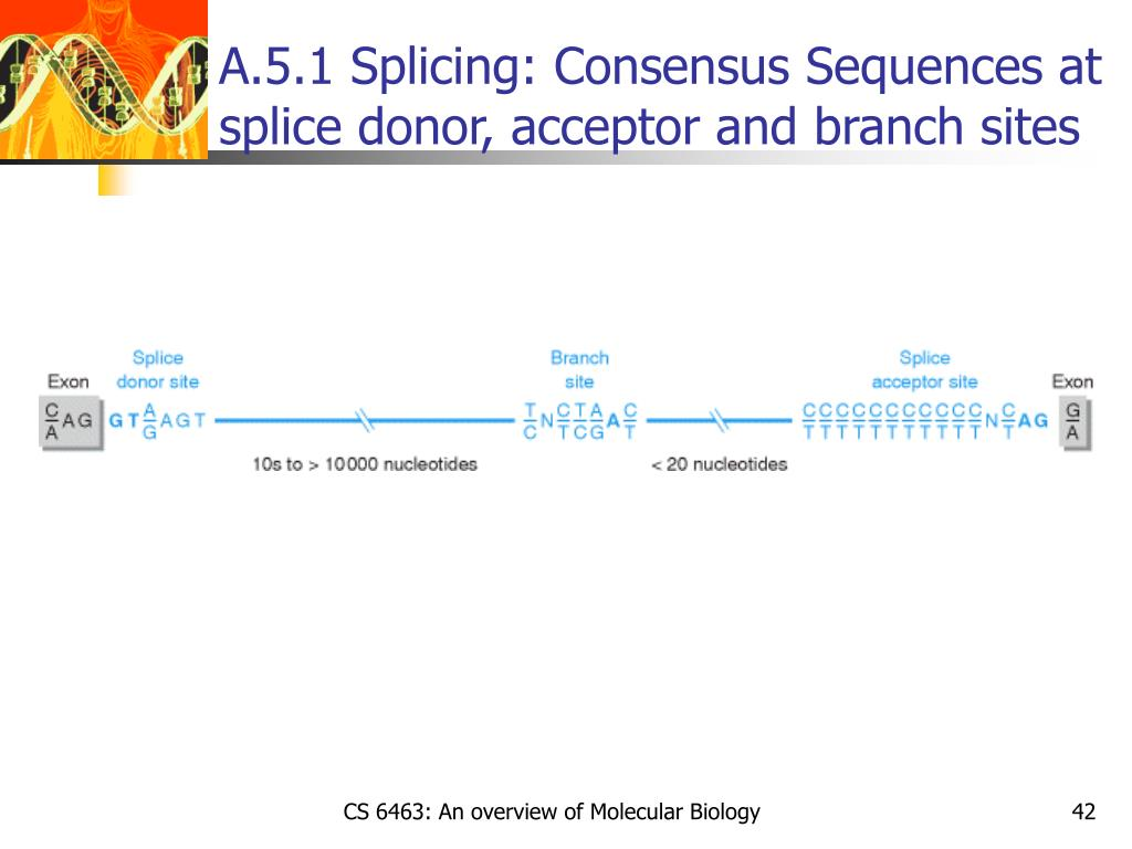 A.5.1 Splicing: Consensus Sequences at splice donor, acceptor and branch sites