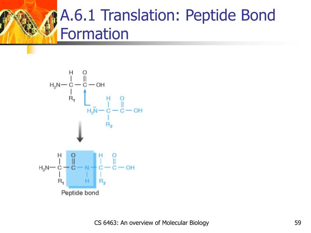 A.6.1 Translation: Peptide Bond Formation