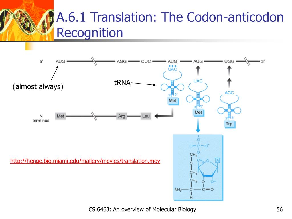 A.6.1 Translation: The Codon-anticodon Recognition