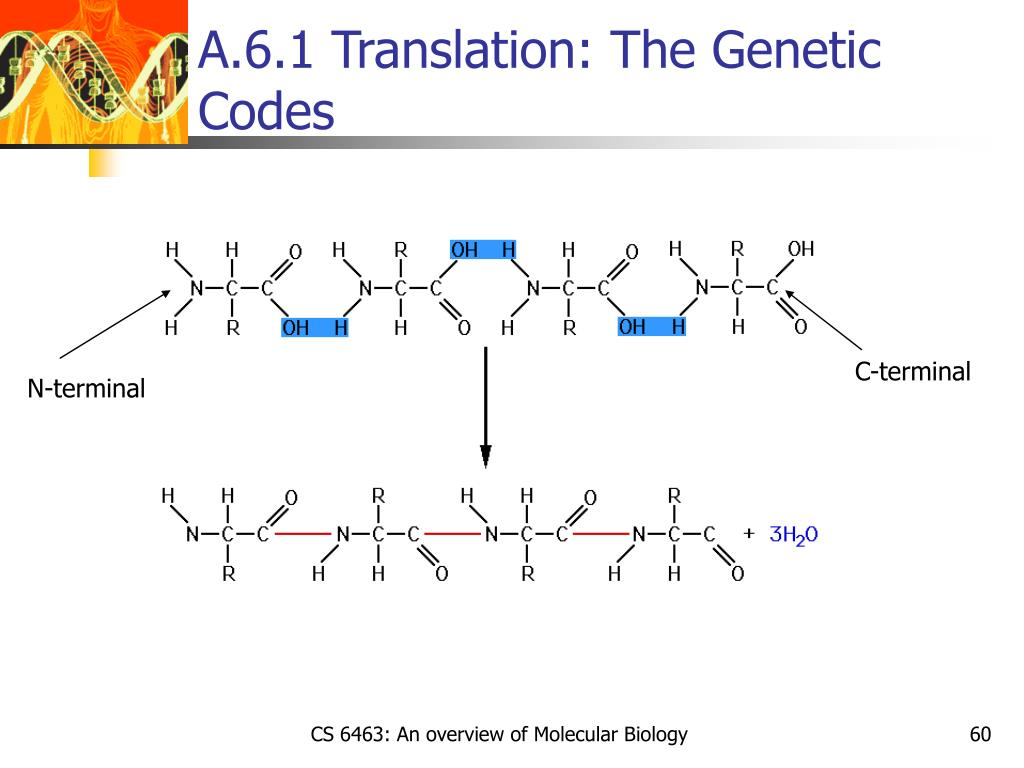 A.6.1 Translation: The Genetic Codes