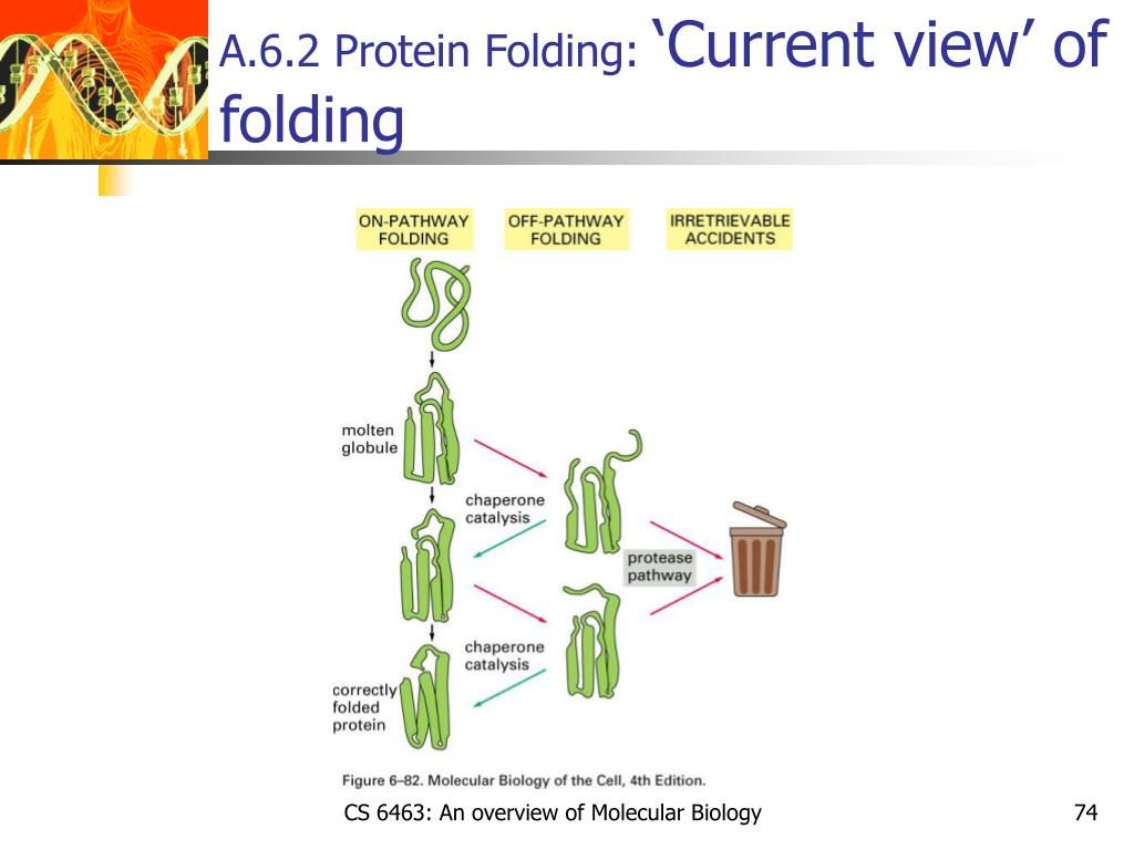 A.6.2 Protein Folding:
