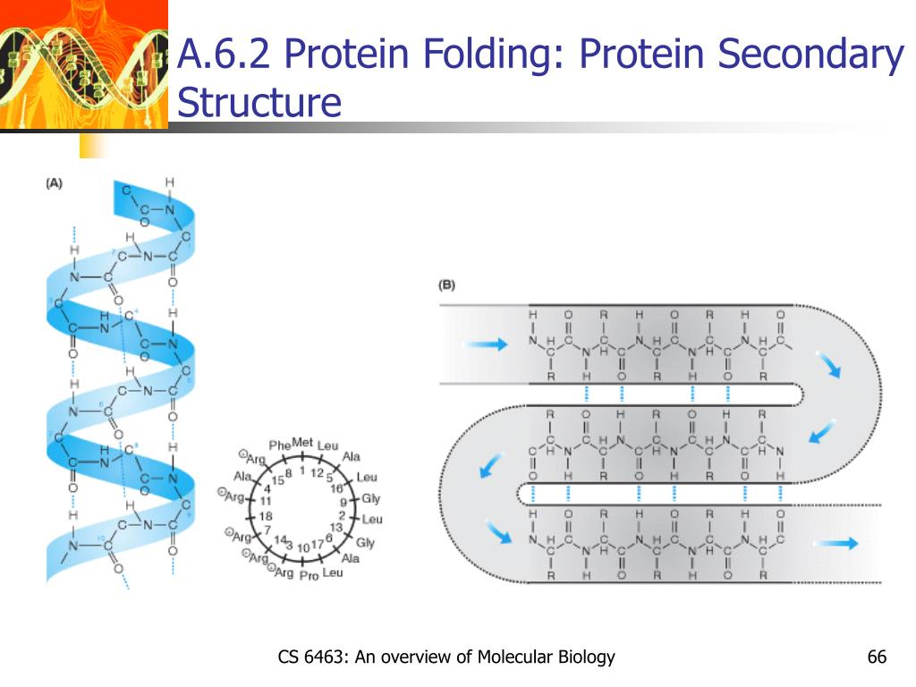 A.6.2 Protein Folding: Protein Secondary Structure
