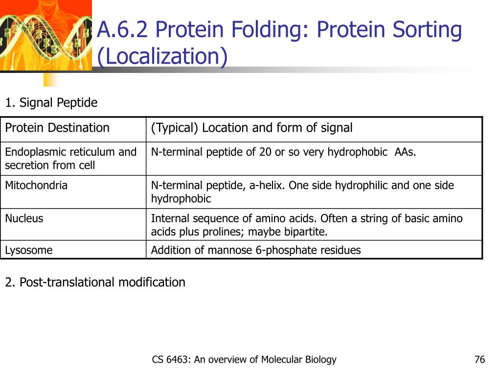 A.6.2 Protein Folding: Protein Sorting (Localization)
