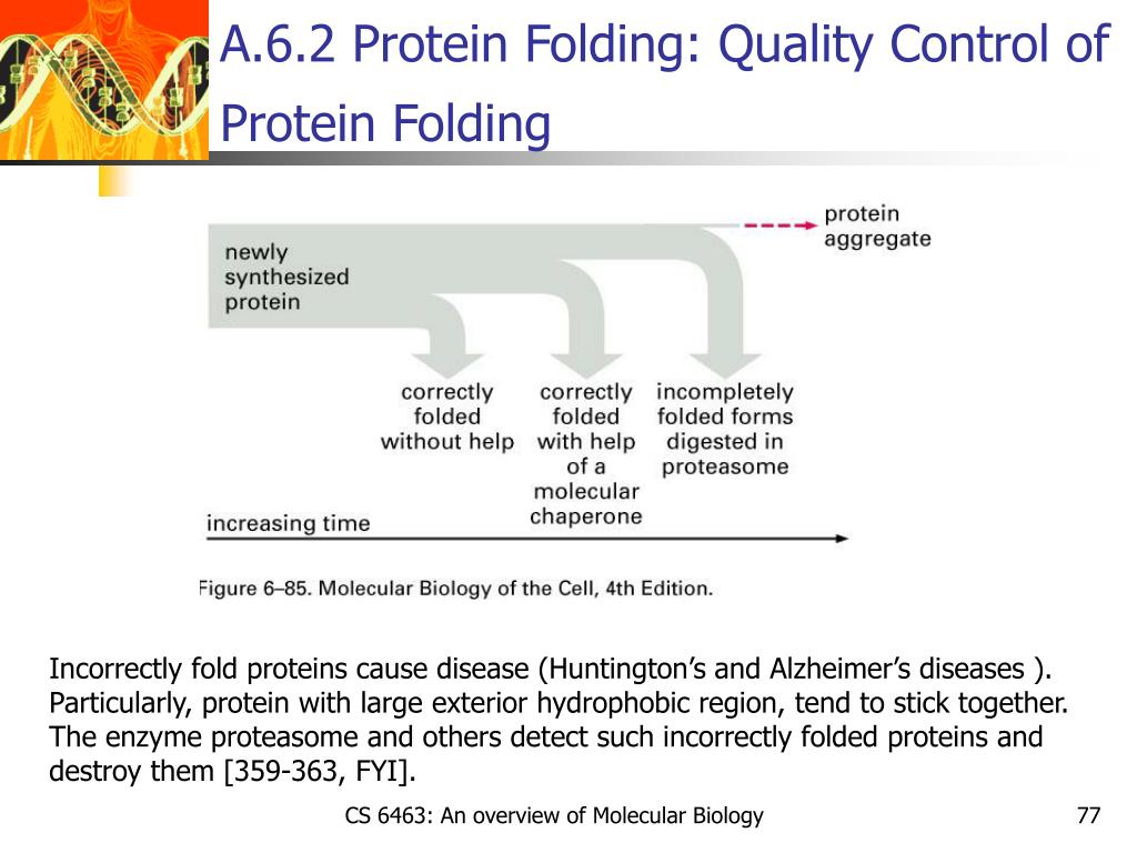 A.6.2 Protein Folding: Quality Control of Protein Folding