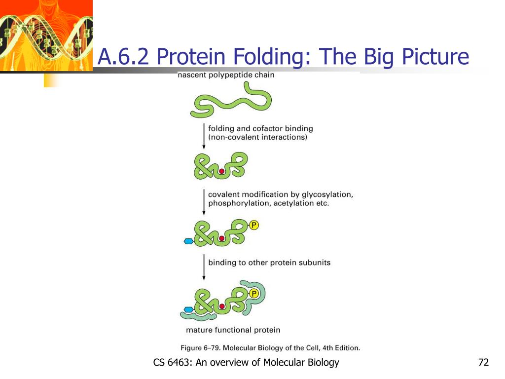 A.6.2 Protein Folding: The Big Picture