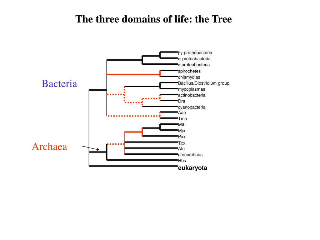 The three domains of life: the Tree