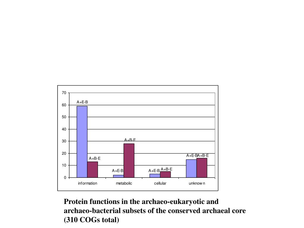 Protein functions in the archaeo-eukaryotic and