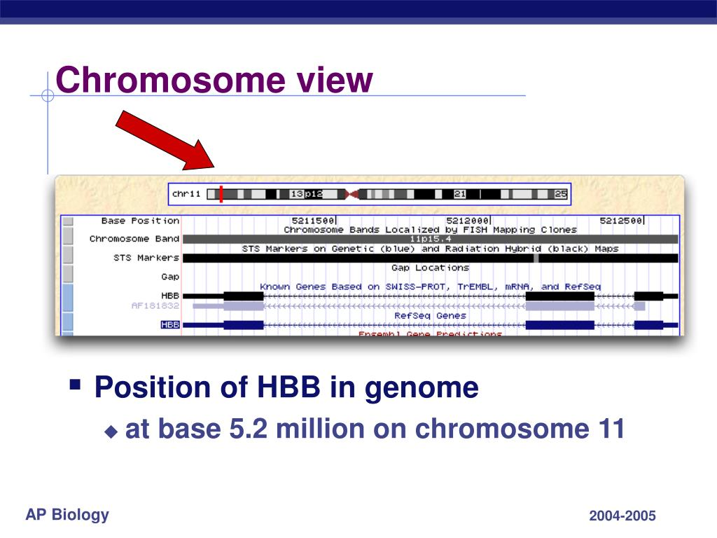 Chromosome view