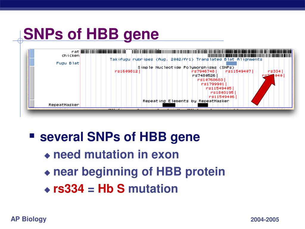 SNPs of HBB gene
