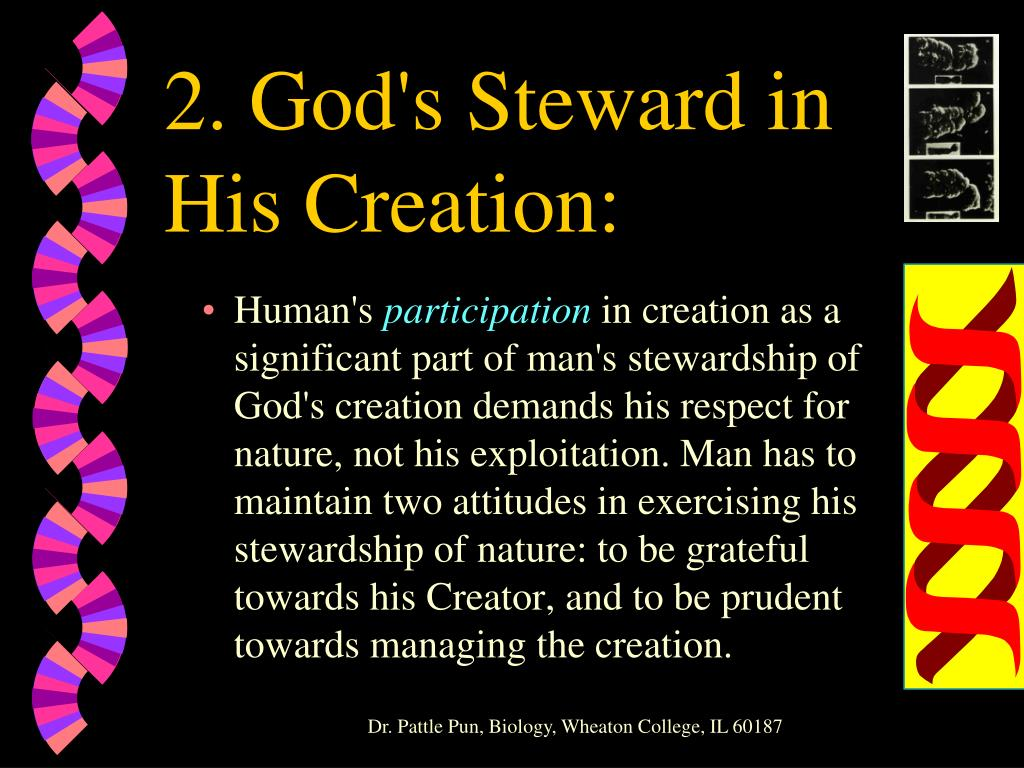 2. God's Steward in His Creation: