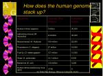 how does the human genome stack up