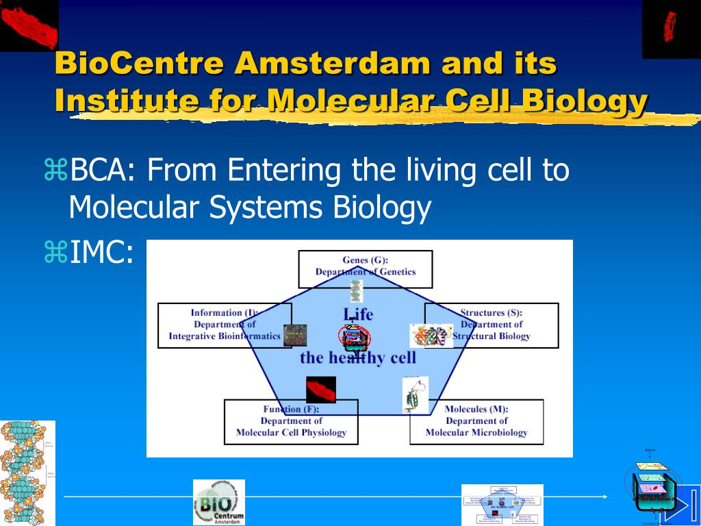 BioCentre Amsterdam and its Institute for Molecular Cell Biology
