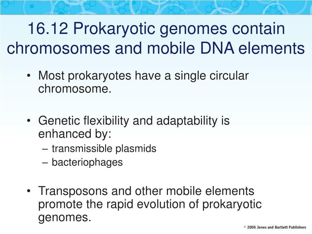 16.12 Prokaryotic genomes contain chromosomes and mobile DNA elements