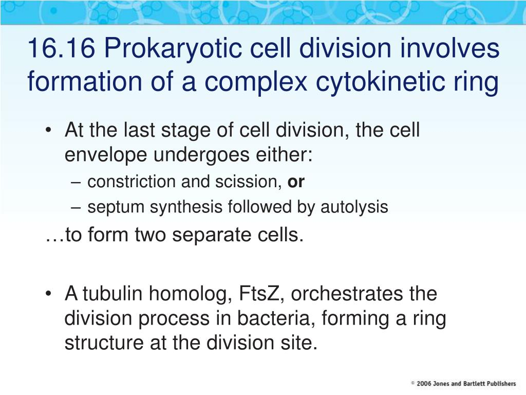 16.16 Prokaryotic cell division involves formation of a complex cytokinetic ring