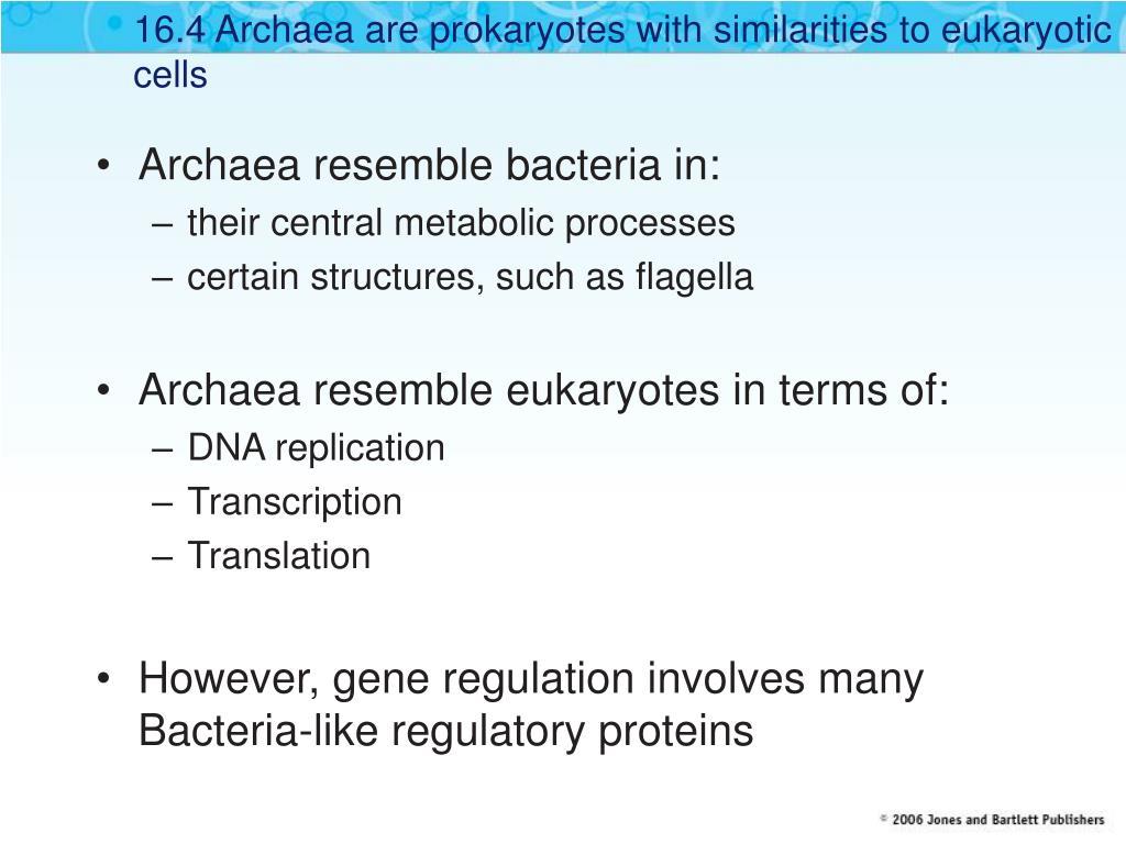 16.4 Archaea are prokaryotes with similarities to eukaryotic cells