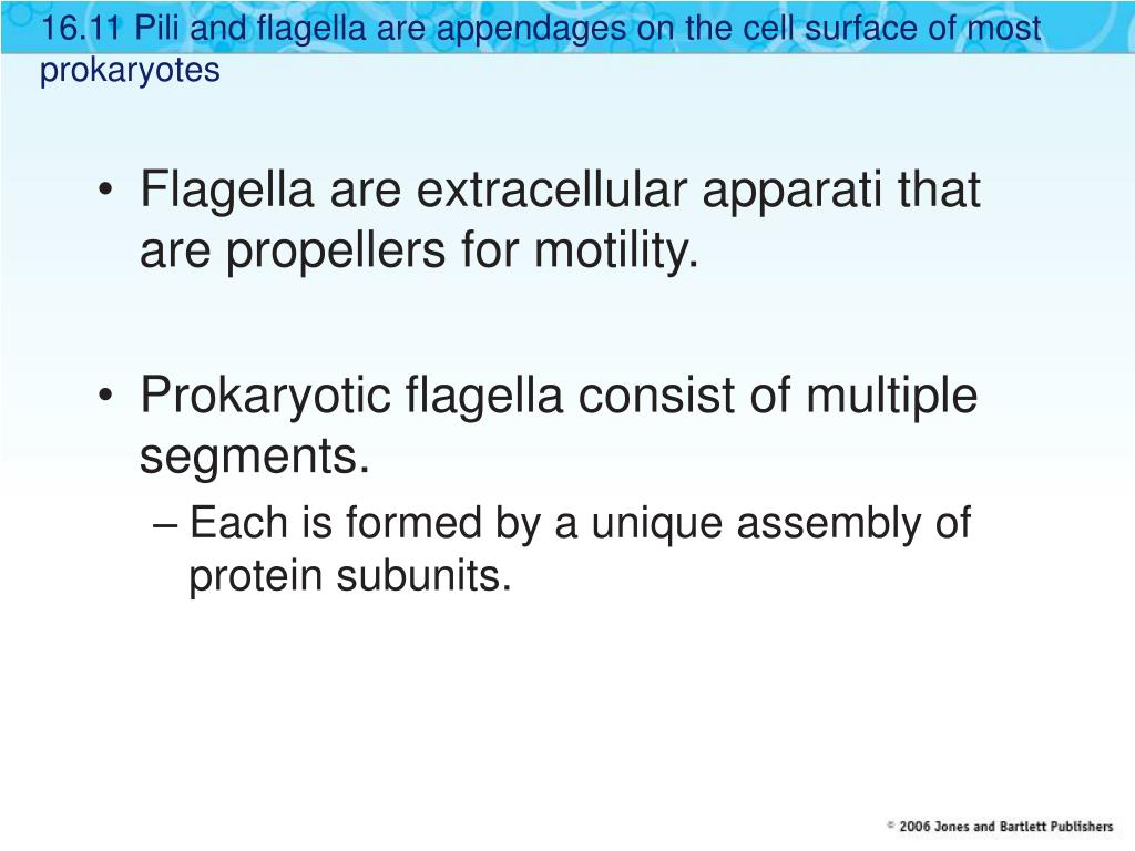 16.11 Pili and flagella are appendages on the cell surface of most prokaryotes