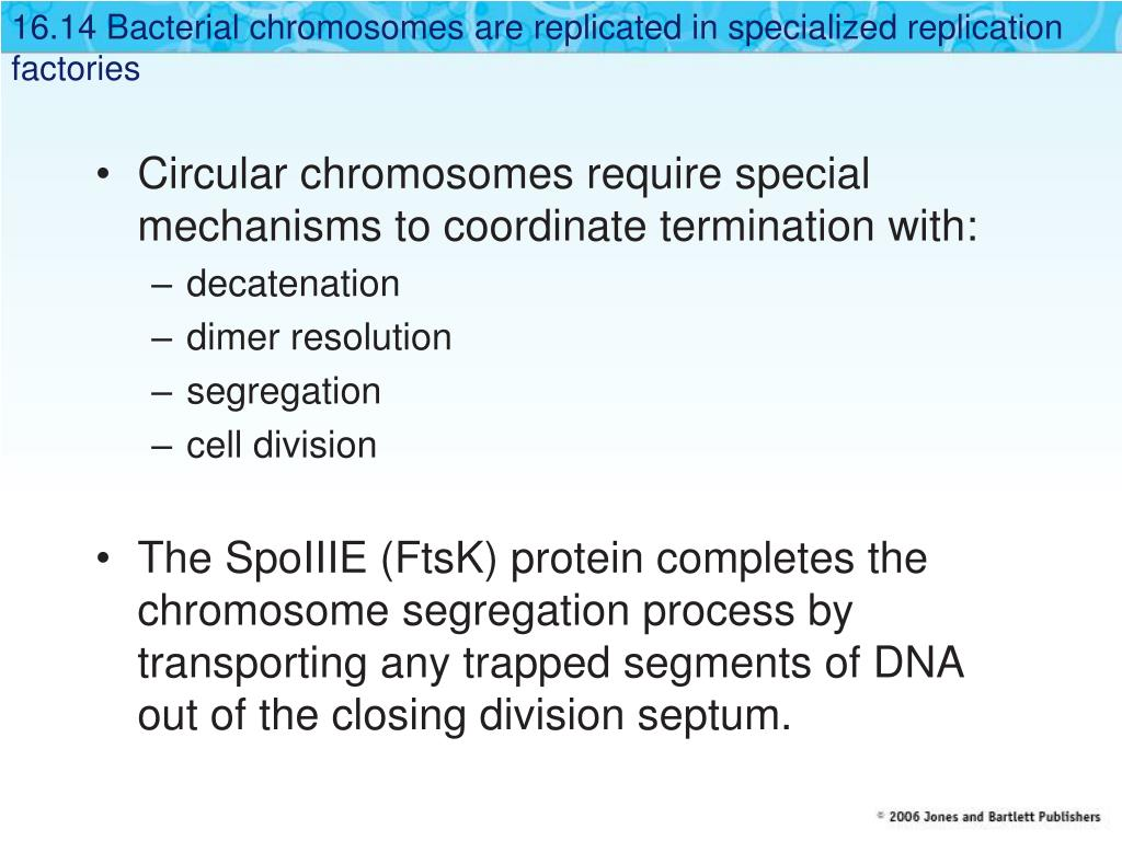 16.14 Bacterial chromosomes are replicated in specialized replication factories