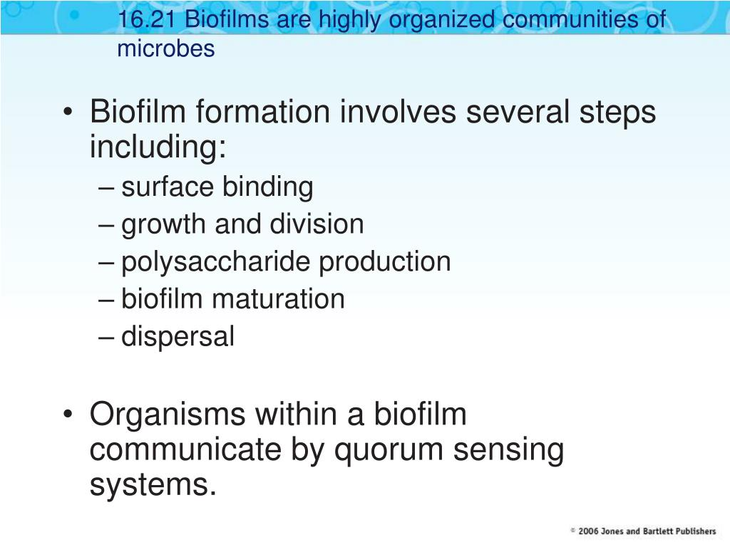 16.21 Biofilms are highly organized communities of microbes