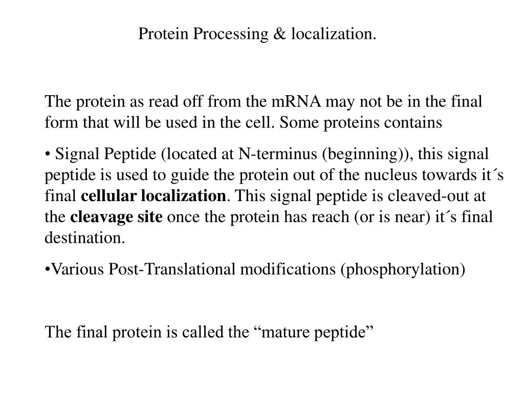 Protein Processing & localization.