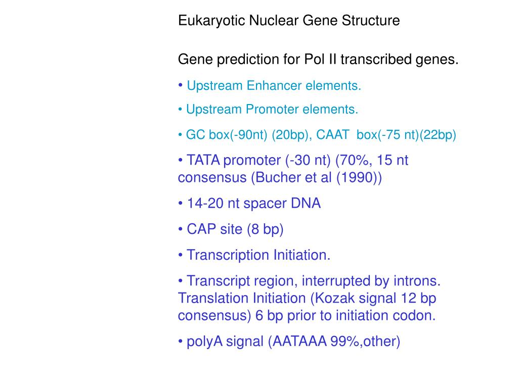 Eukaryotic Nuclear Gene Structure