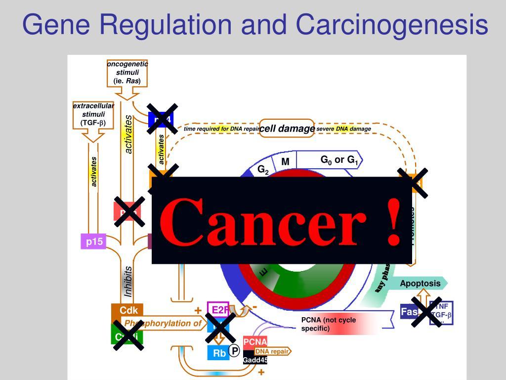 oncogenetic