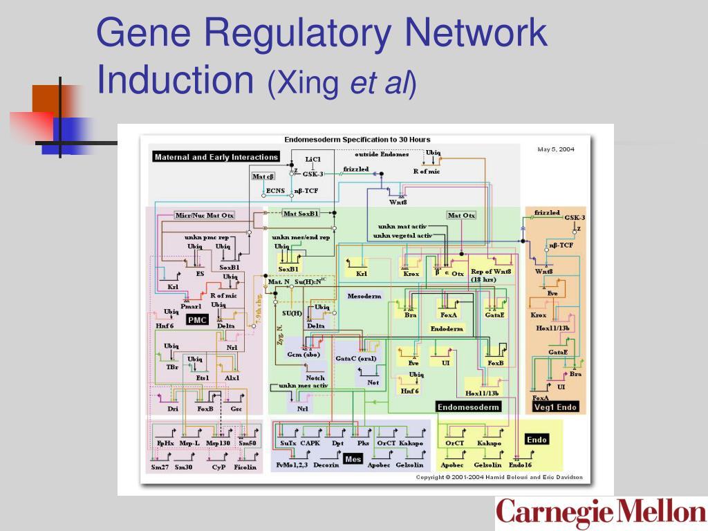 Gene Regulatory Network Induction