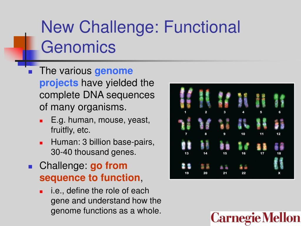 New Challenge: Functional Genomics