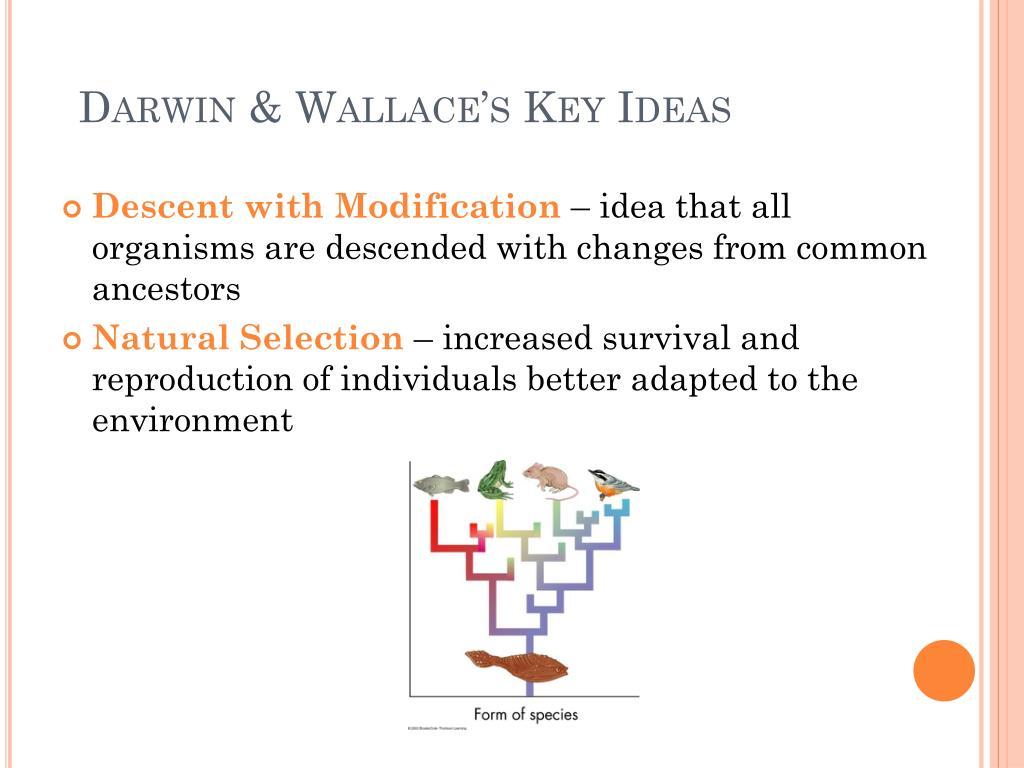 Darwin & Wallace's Key Ideas