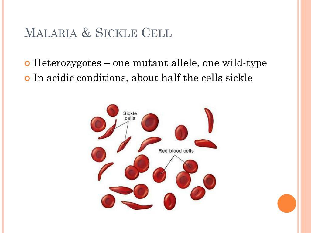 Malaria & Sickle Cell