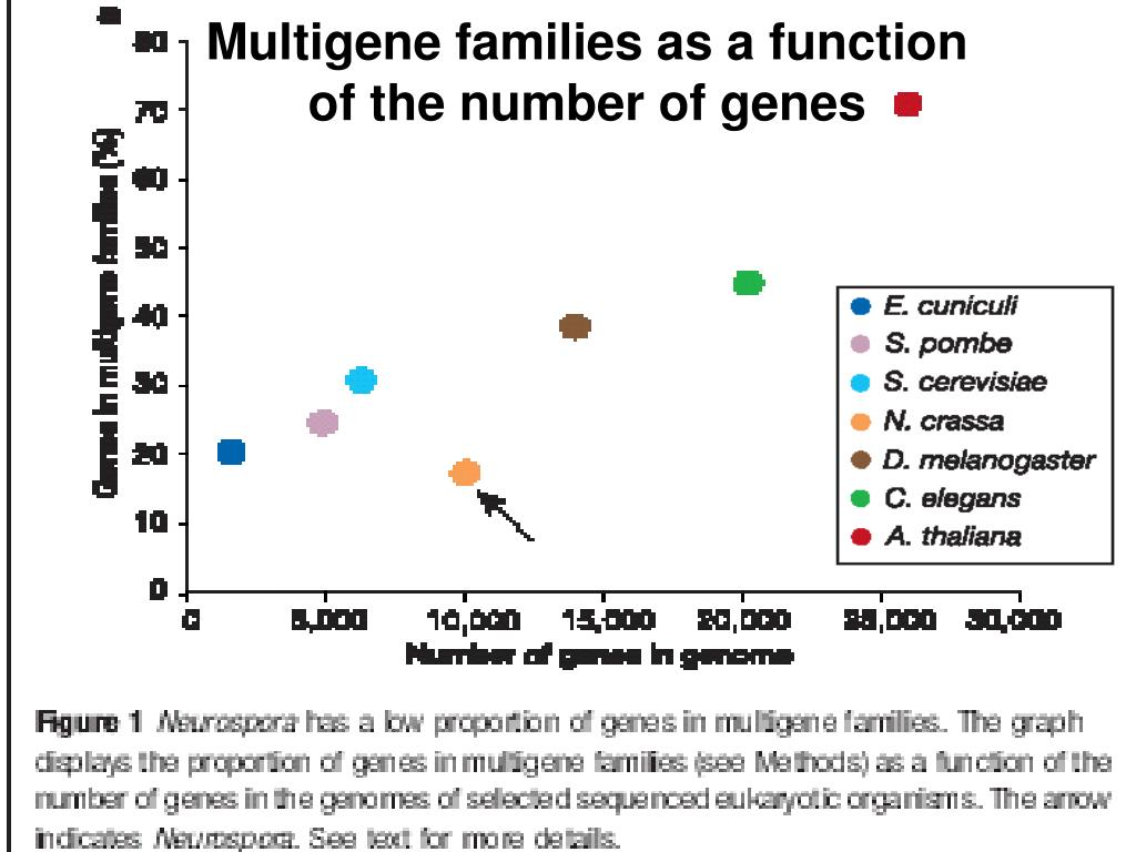 Multigene families as a function of the number of genes