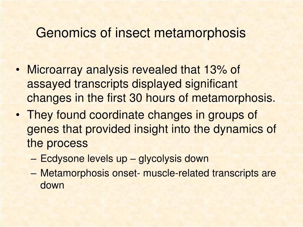 Genomics of insect metamorphosis