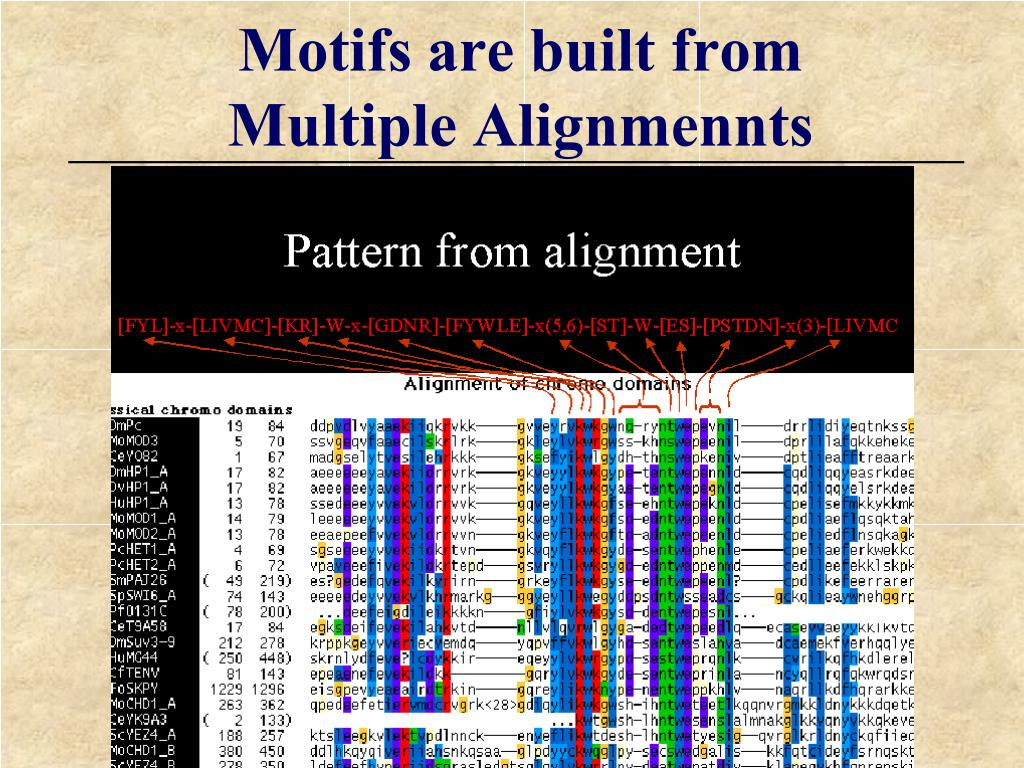 Motifs are built from