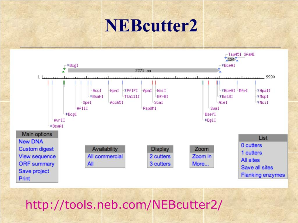NEBcutter2