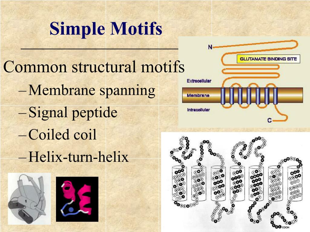 Common structural motifs