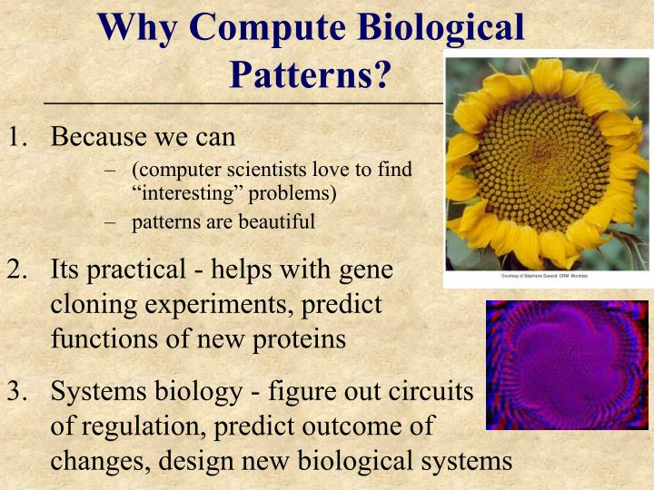 Why compute biological patterns