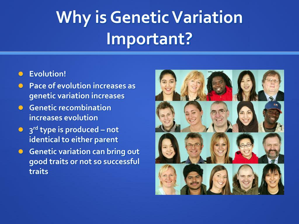 genetic variation Each individual has its unique set of traits, such as size, color, height, body weight, skin colour and even the ability to find food such differences in individuals from the same parents are called variation.