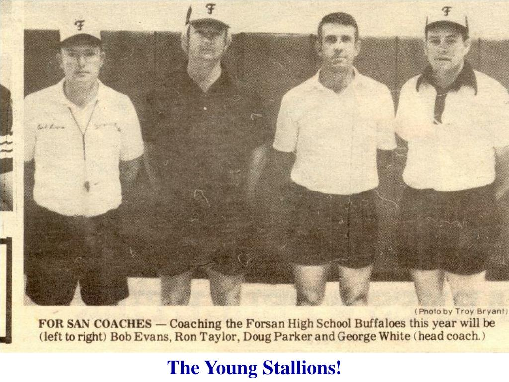 The Young Stallions!