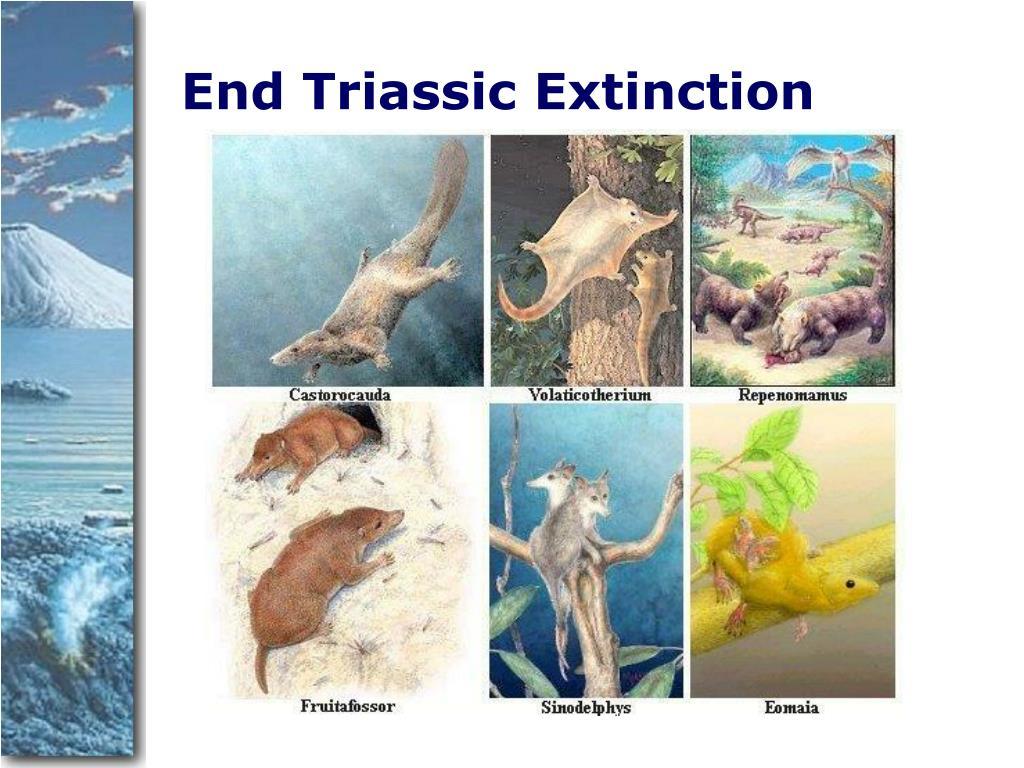 End Triassic Extinction