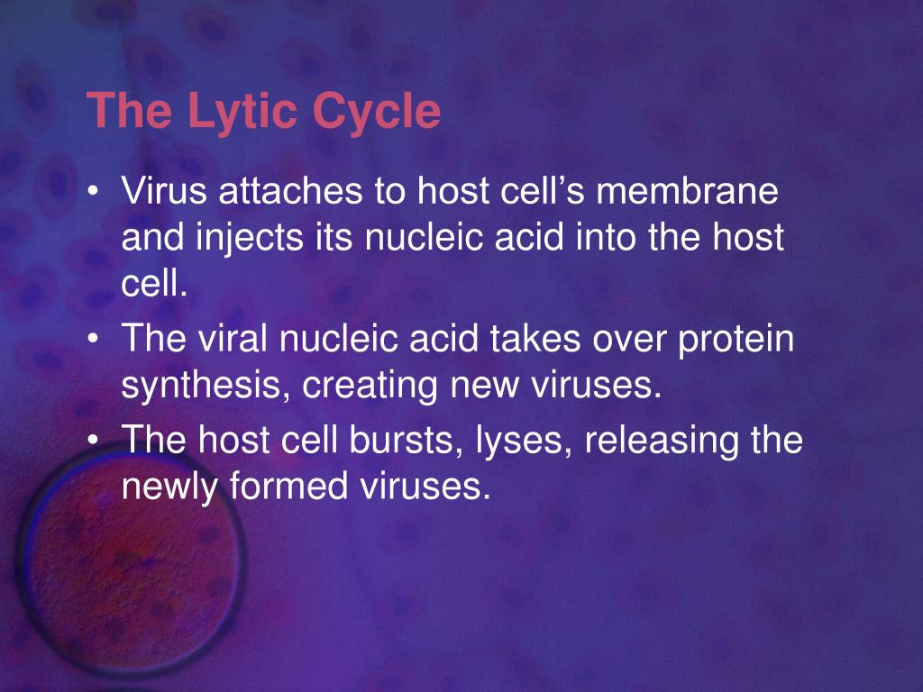 The Lytic Cycle