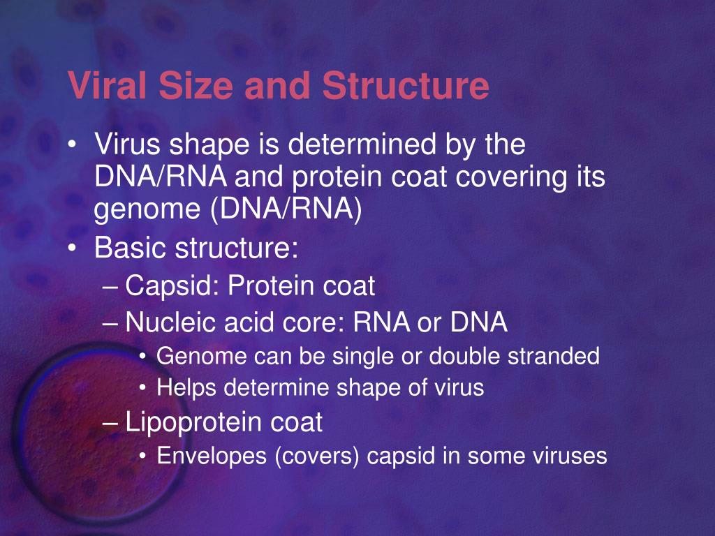 Viral Size and Structure