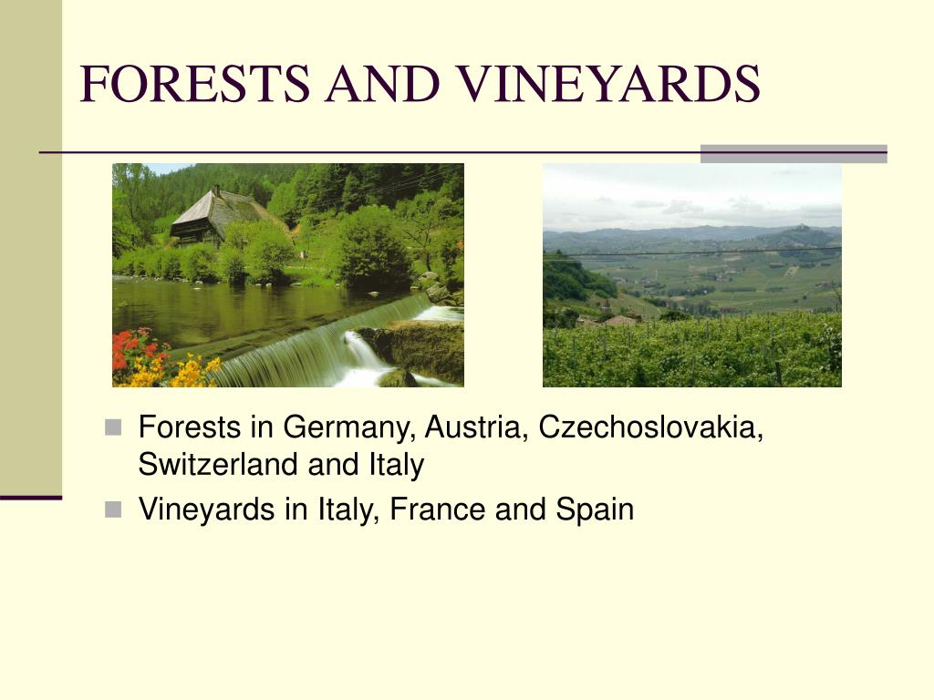 FORESTS AND VINEYARDS