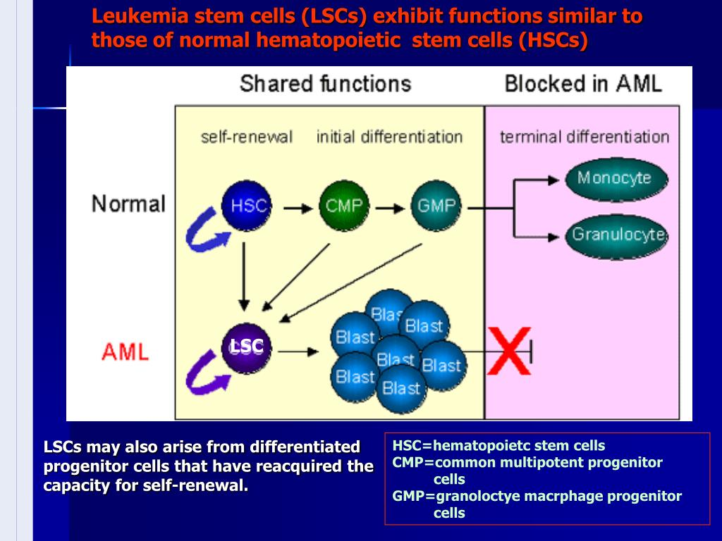 Leukemia stem cells (LSCs) exhibit functions similar to those of normal hematopoietic  stem cells (HSCs)