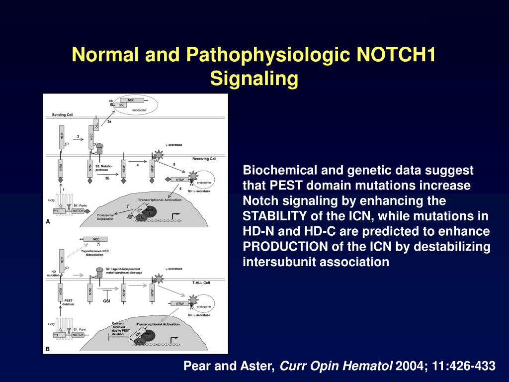 Normal and Pathophysiologic NOTCH1 Signaling