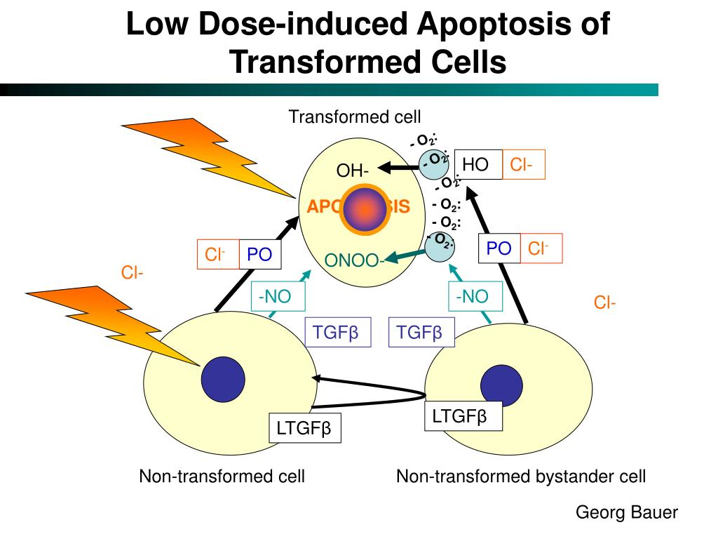 Low Dose-induced Apoptosis of Transformed Cells