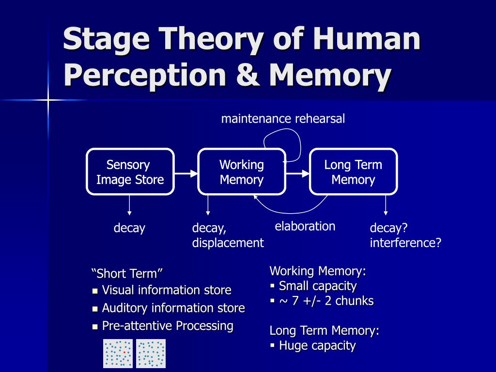 Stage Theory of Human Perception & Memory