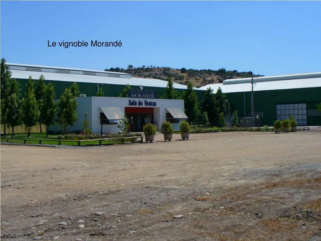 Le vignoble Morandé