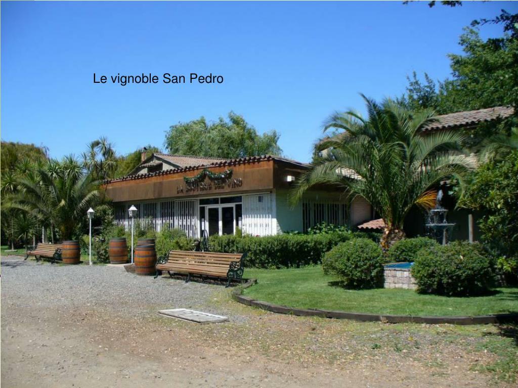 Le vignoble San Pedro