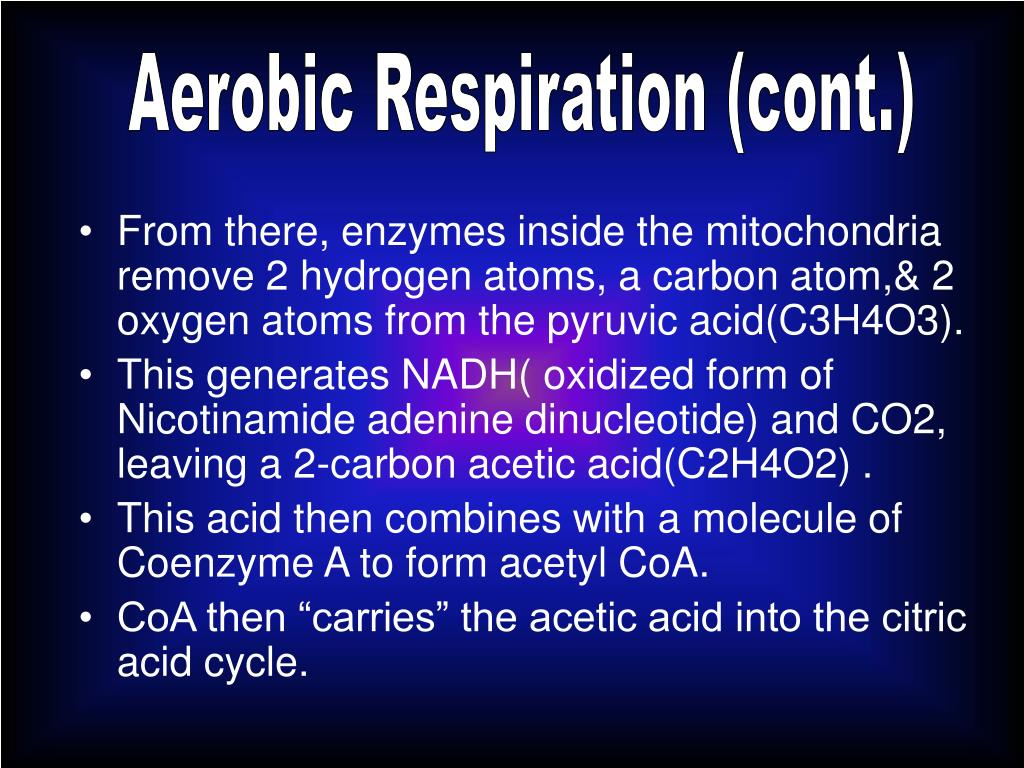 Aerobic Respiration (cont.)
