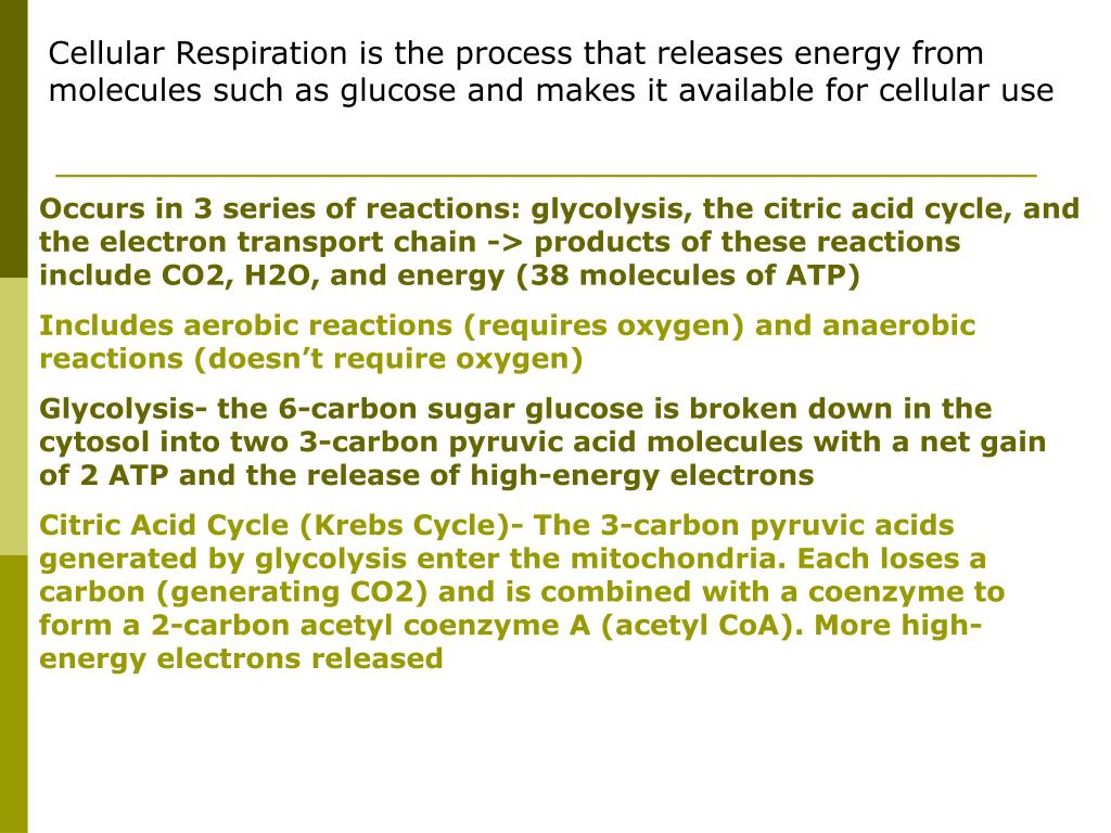 Cellular Respiration is the process that releases energy from molecules such as glucose and makes it available for cellular use